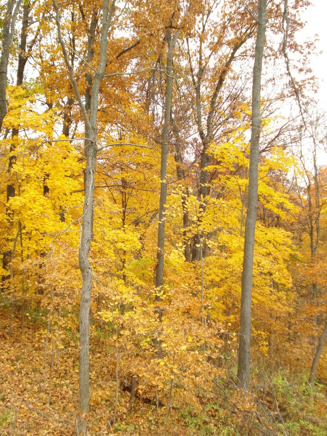 I love the simple majesty of the leaves as they begin to change color and texture.