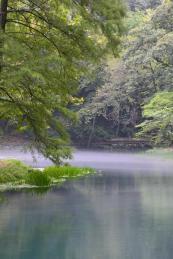 Springs 4