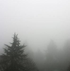 Evergreen trees in the fog