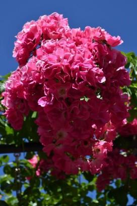 flowers at Pt D
